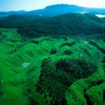 Rotorua Surroundings